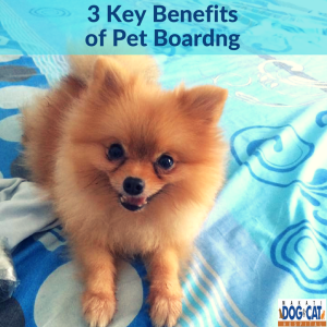 Pet Boarding Advantages: 3 Key Benefits of Boarding Your Pet