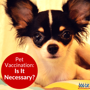 Pet Vaccination: Is It Necessary?