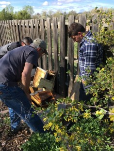 Sam Doll, Terry Jones, and James Potter inspect an older bee box at the Potter residence.