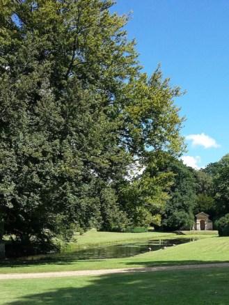 Belton House Gardens-Beech Tree