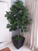 6ft Fiddle Leaf (single-trunk)