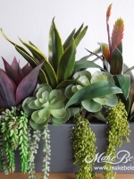 small_succulents_in_low_Earth_Wall_rect