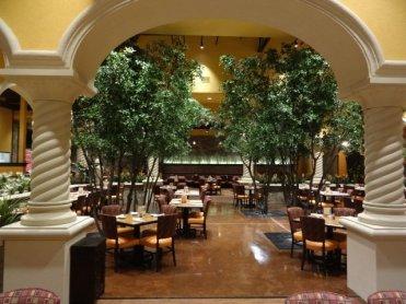 14ft-Black-Olive-Trees