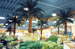 preserved palm trees on structural columns - Vallarta Supermarkets