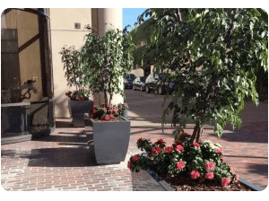 artificial plants as drought solution