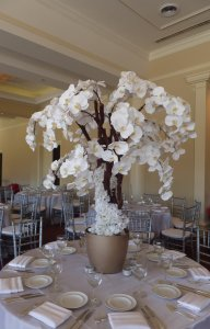 4ft orchid tree in white