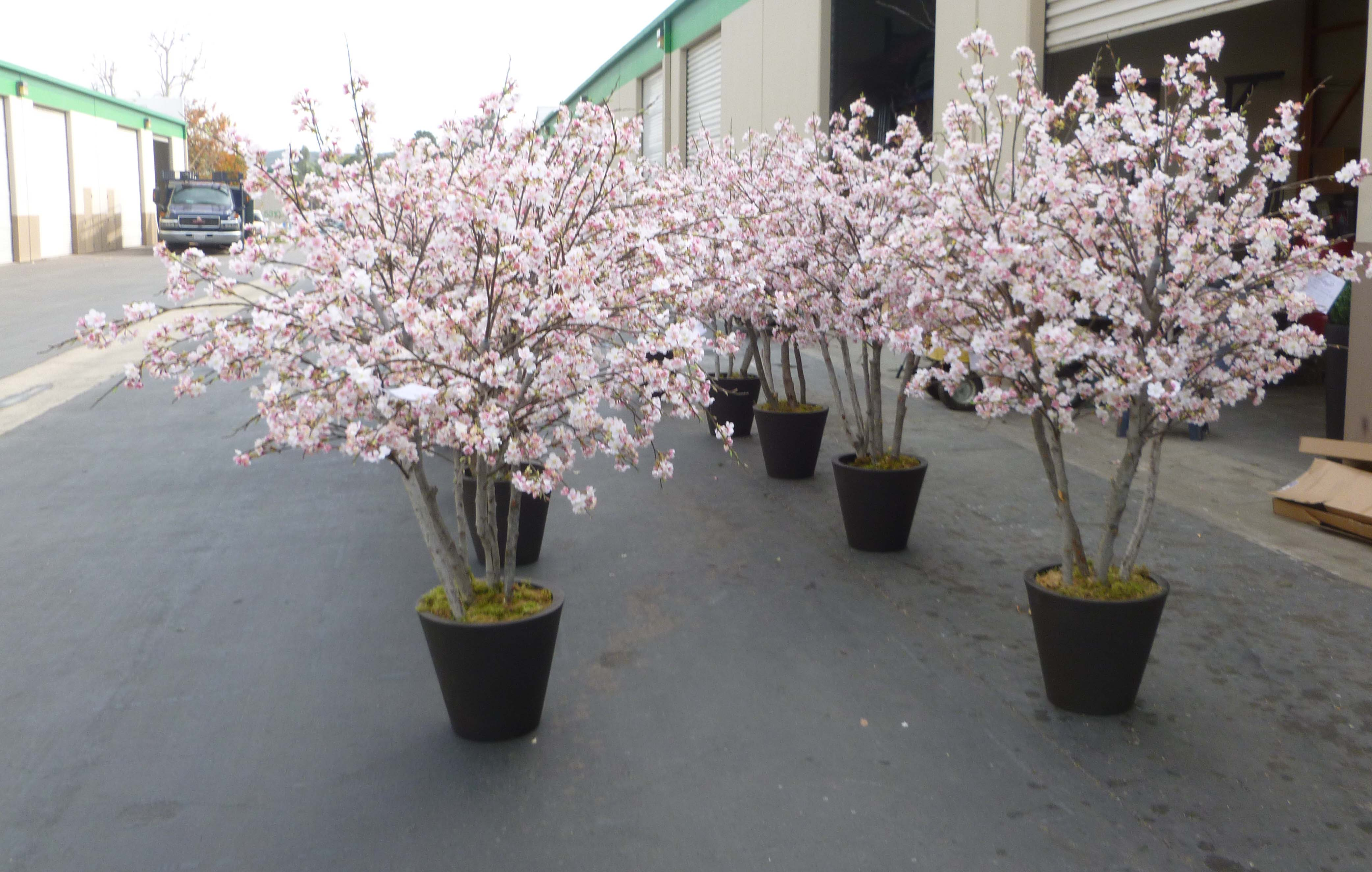 Ringing In Chinese New Year With Cherry Blossom Trees At