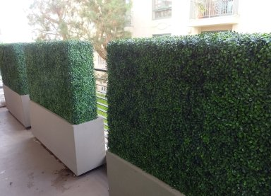 Beverly Hills condominium balcony - UV boxwood hedges to create privacy