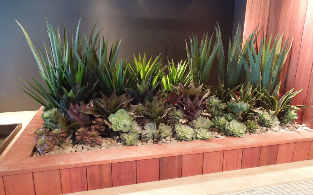 Life-Like Succulents Are Wildly Popular!