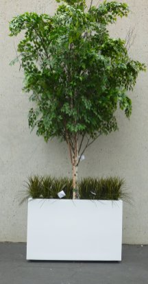 makebeleaves-15ft-white-birch-tree-with-grasses