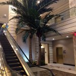 Hawaiian Gardens Casino faux palm trees
