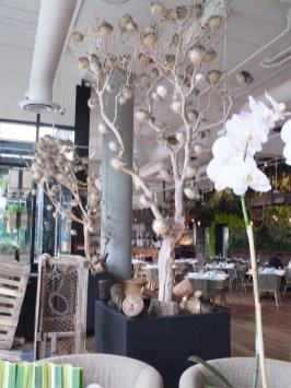 Manzanita wood trunks