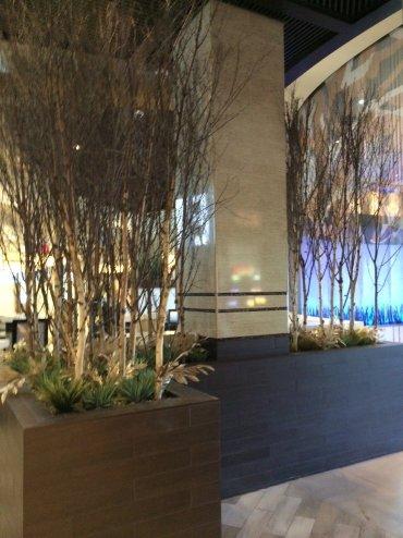 Casino plantscape