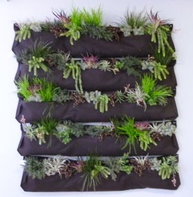 faux succulent wall pockets