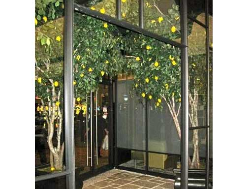 Borgata, Trump Casino Italian restaurant artificial Lemon Trees