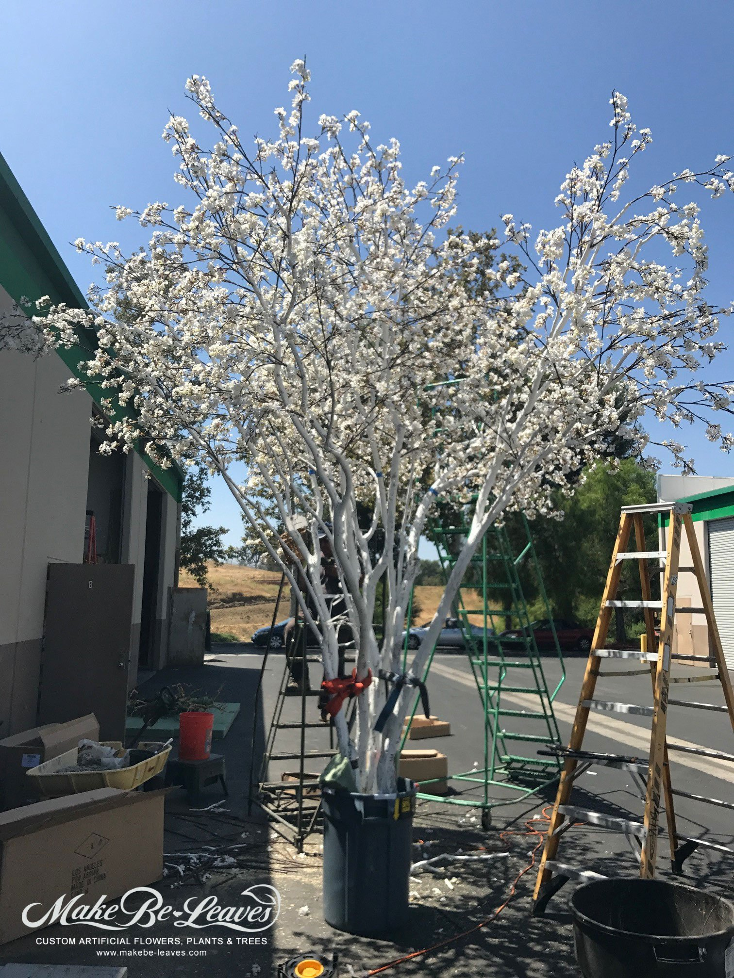 Our Largest Silk Pink Cherry Blossom Tree Is Over 14 Feet Make Be Leaves