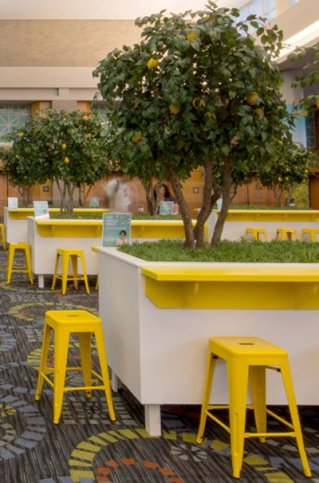 artificial-lemon-trees