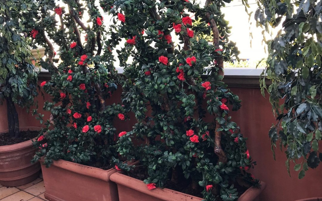 Custom UV Exterior Faux Trees, Artificial Plants, and Colorful Trellis plantings