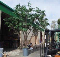 16ft-artificial-oak-tree