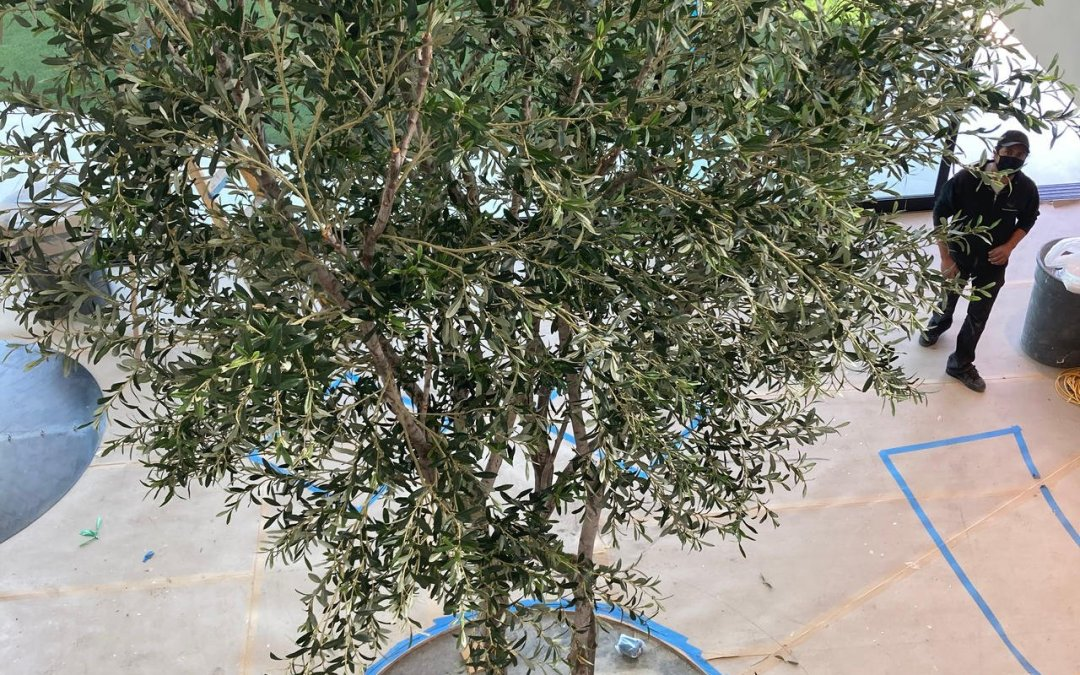 20ft Artificial Mediterranean Olive Tree