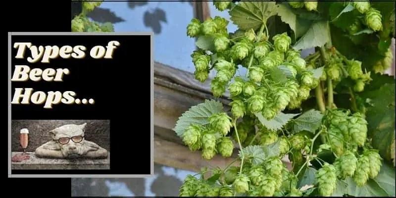 Types of beer hops