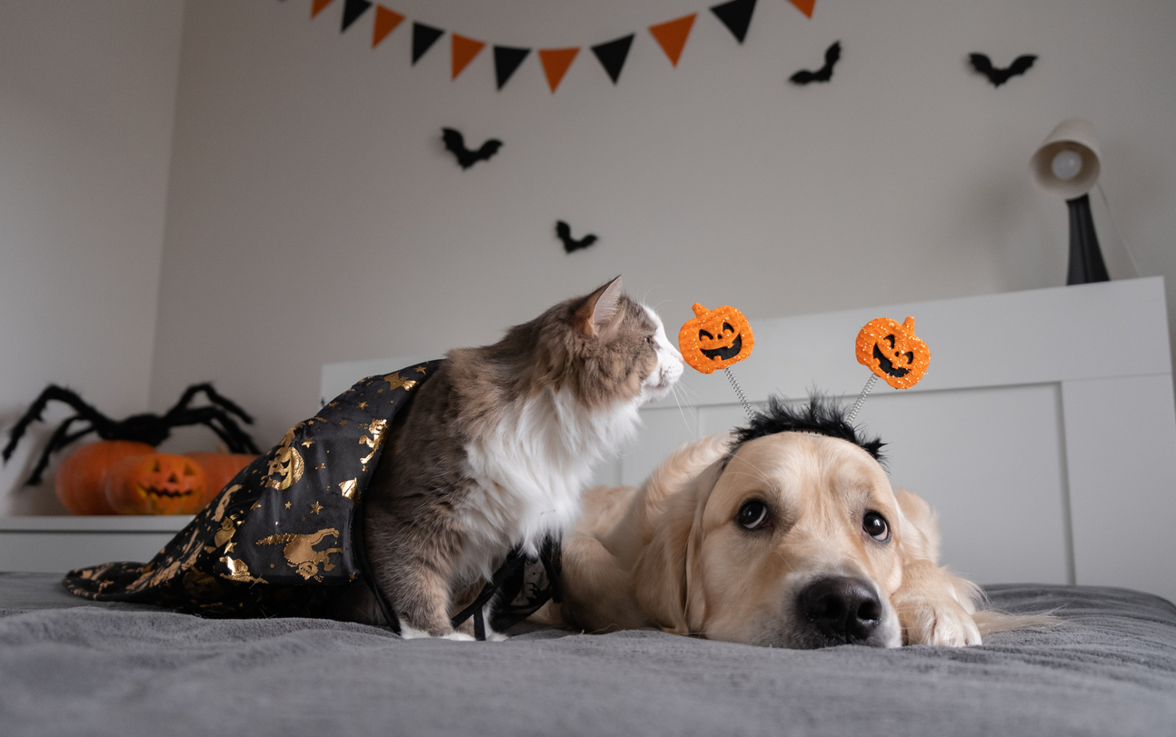 Five Tips for Celebrating Halloween and Fall Festivals with People Living with Dementia