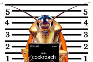 How to get rid of COCKROACHES [eco]