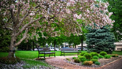 Spring Blooms in Rice Park, Downtown Saint Paul.