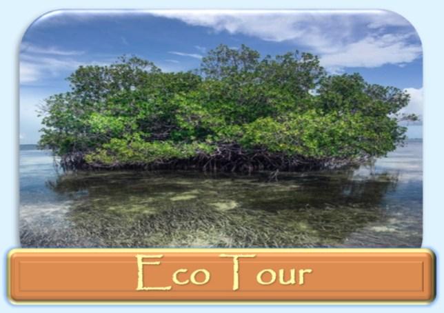 Key west Eco tour