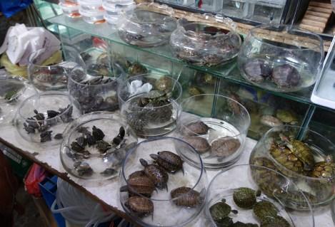 TortoisesPetMarket