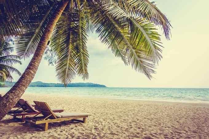 Φοίνικας σε παραλία