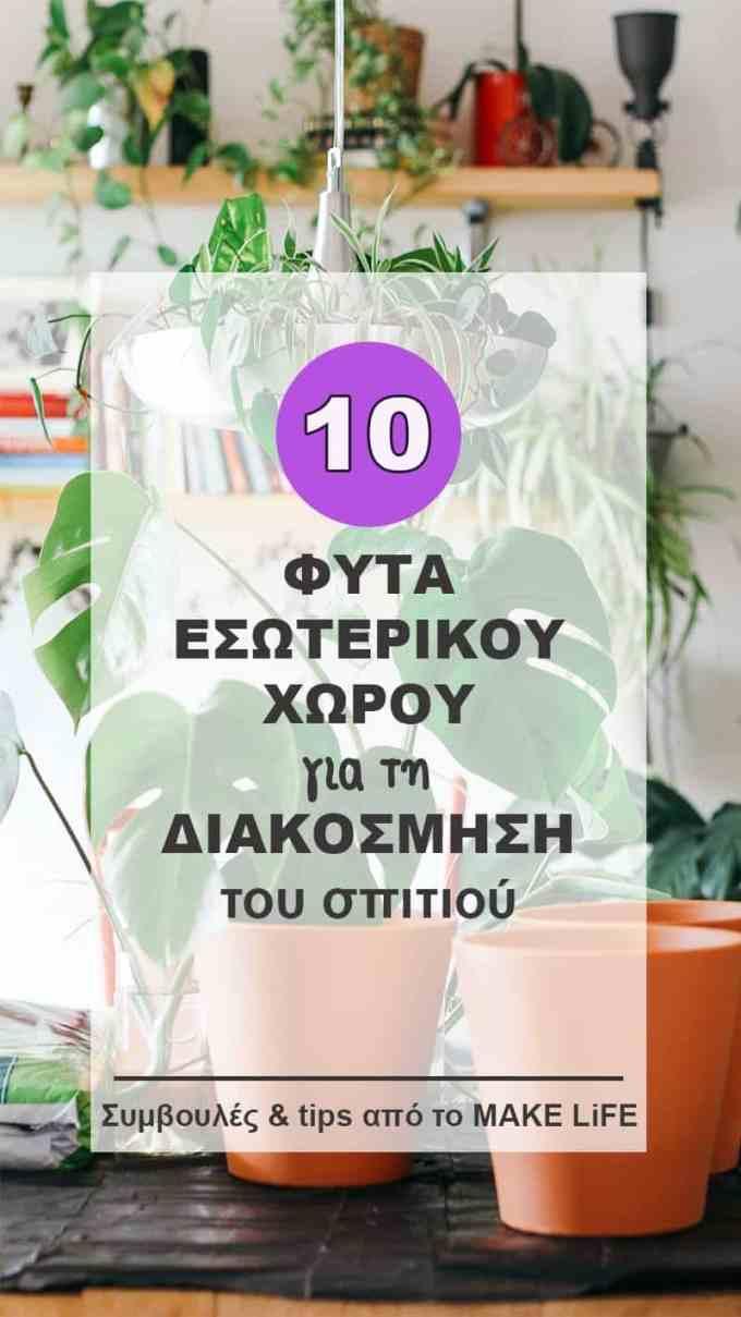 Ιδέες Διακόσμησης με Φυτά Εσωτερικού Χώρου