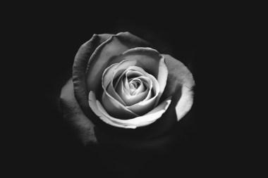 Black Roses For Valentine's Day
