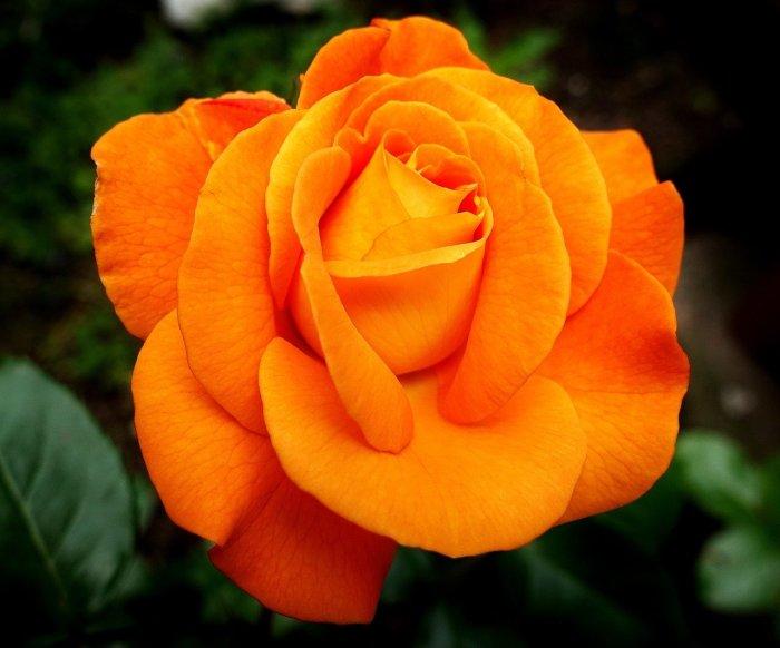 happy valentine's day orange