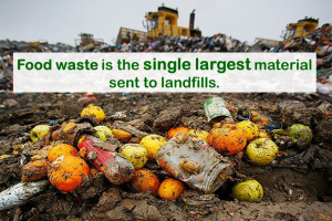 Food Waste Fact