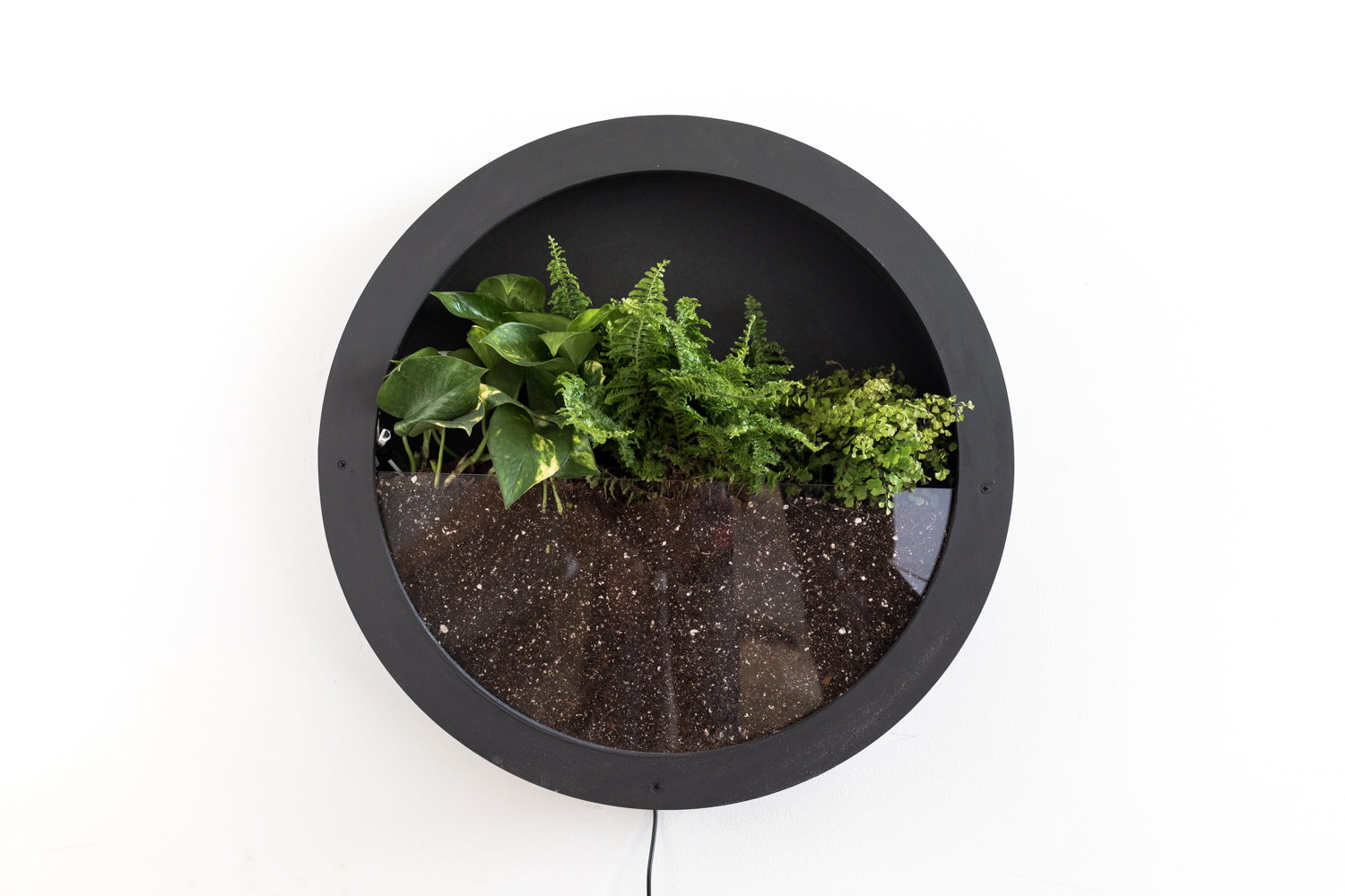 Living Walls U0026 Vertical Terrariums As Wall Mounted Living Art! A Patch Of  Nature On Your Wall With Air Purifying Plants, Full Spectrum LEDs Lighting,  ...