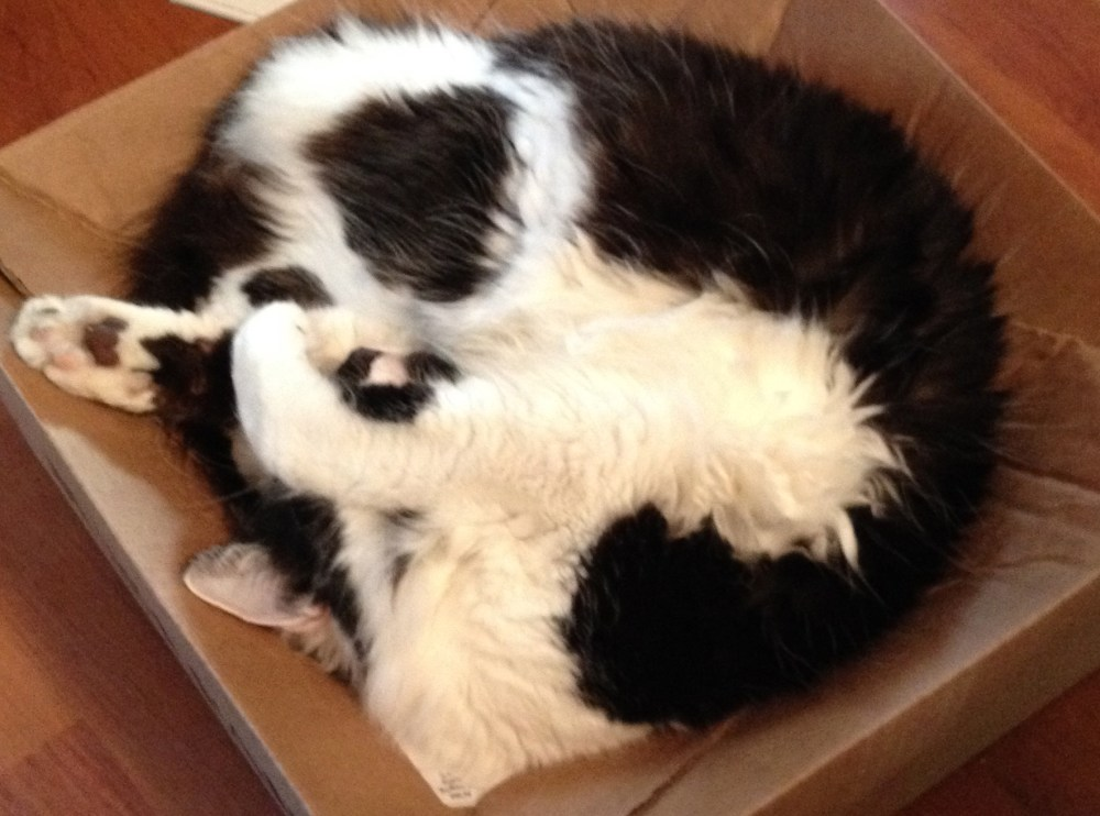 Flat Packs and Cat Tales (2/3)