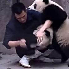 pandas-300x300