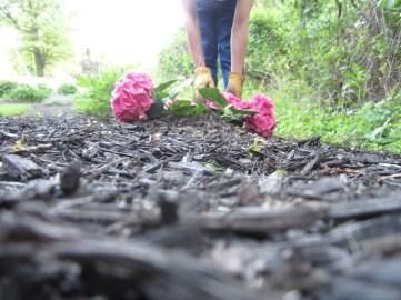 fresh-flowers-by-akwelle-vallis