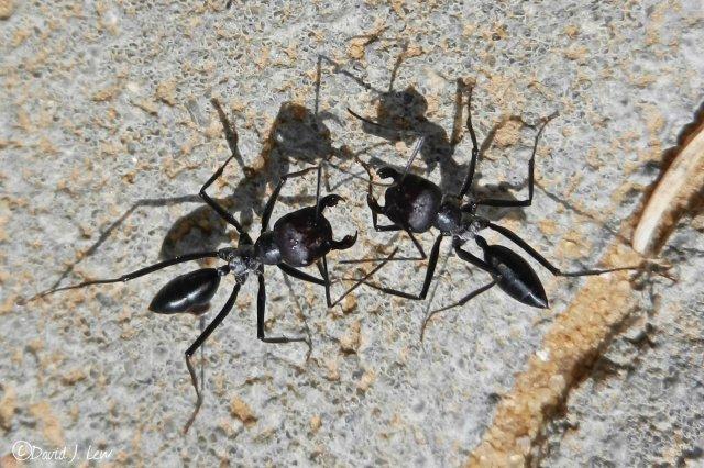 ants- by David J. Lew- Earthquake Boy
