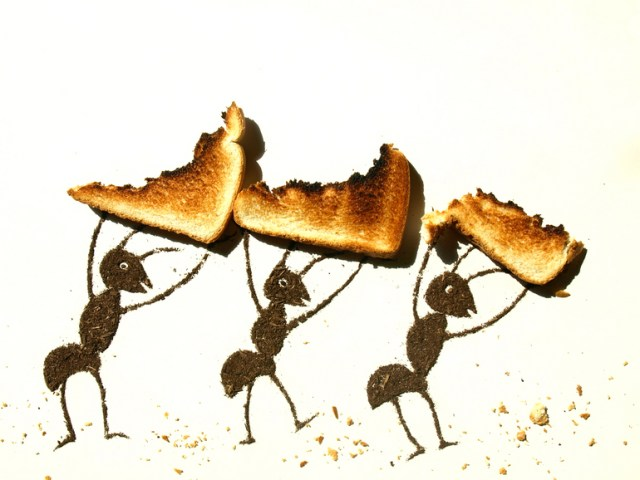 Ants and toast by Sarah Rosado