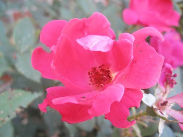 pink flower|Make Something Mondays