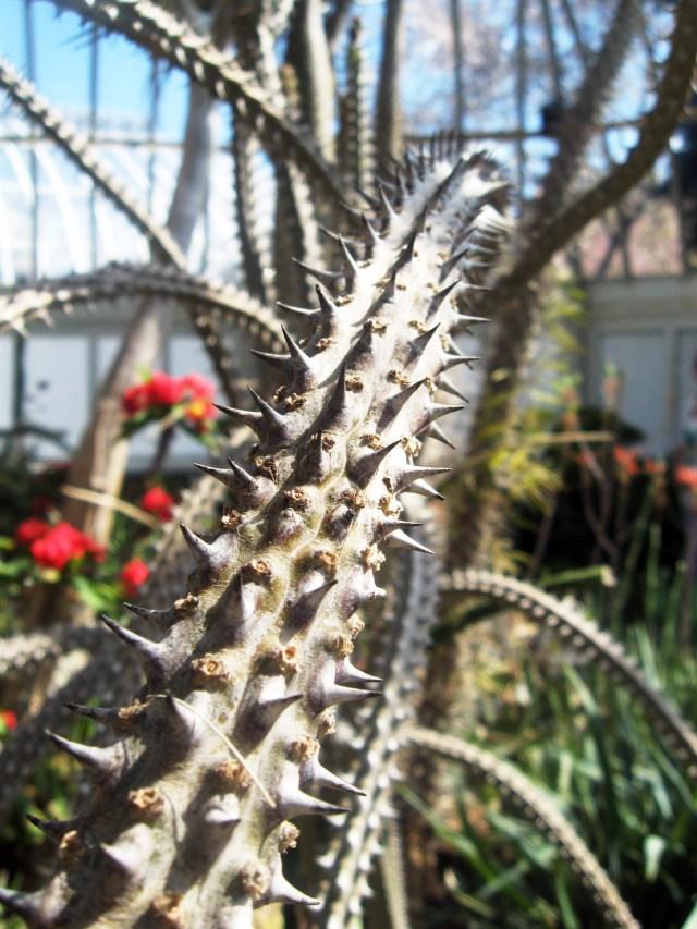 cactus arm
