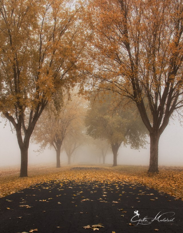 fog on the path