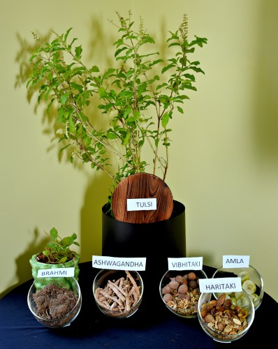 Mumbai bloggers Event: Amway Launches Nutrilite Traditional Herbs Range
