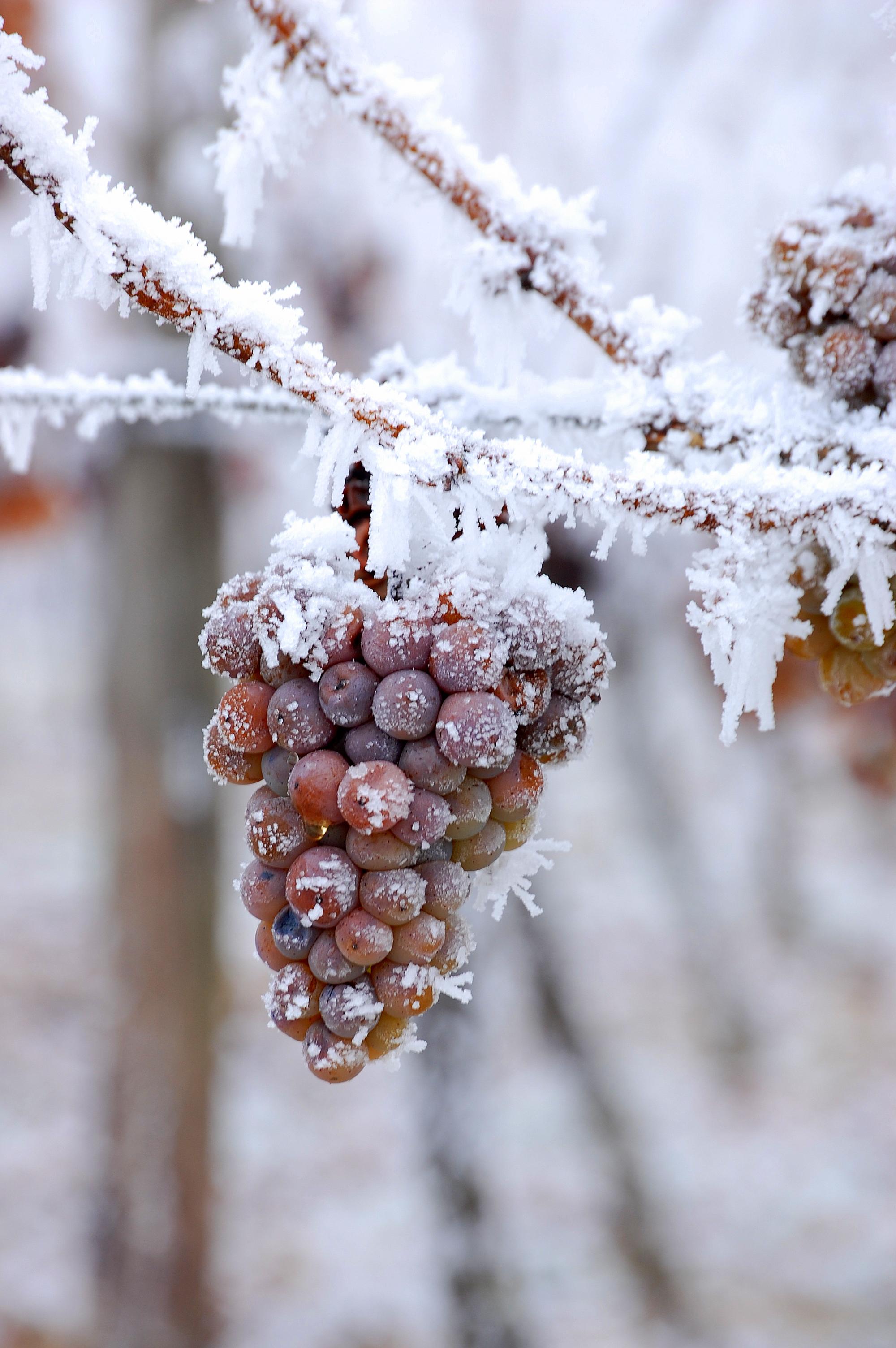 Ice Wine Makeupandwine