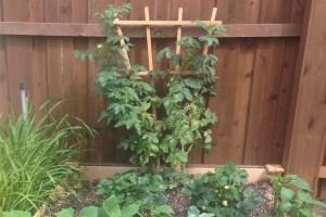 my first garden