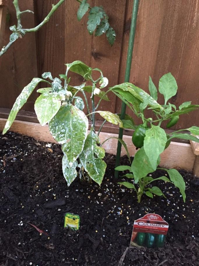 beginner-garden