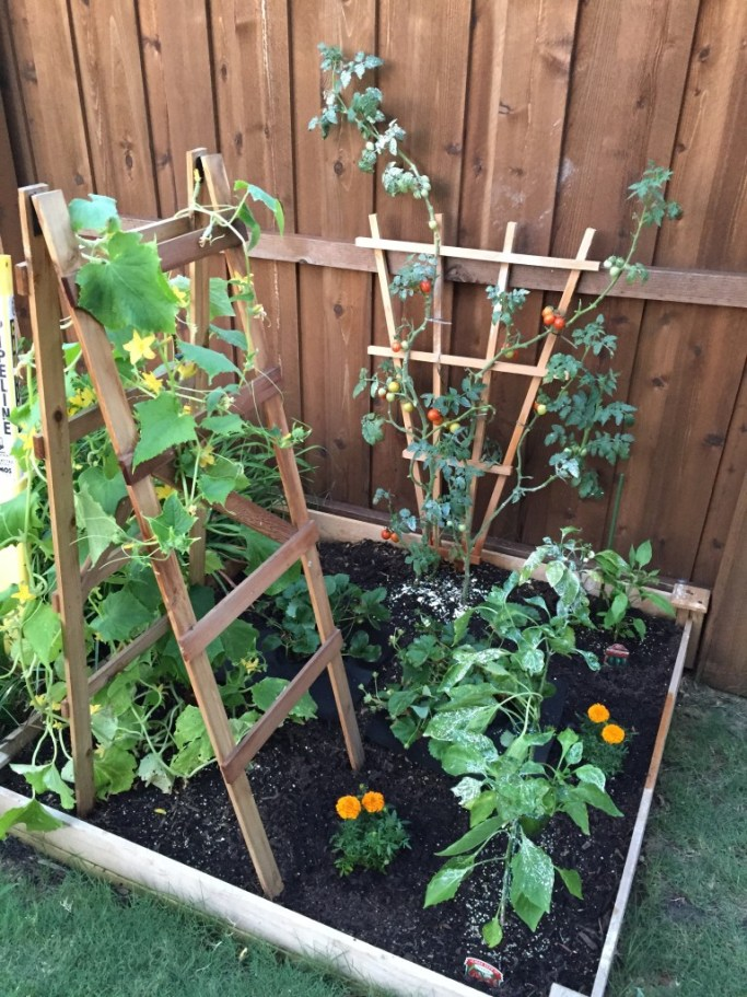 beginner-garden-revamp