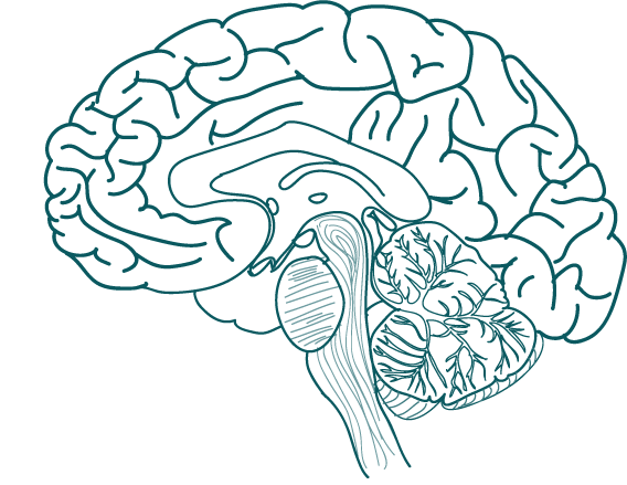 Lumosity Brain Training and Neuroplasticity.